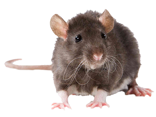 Pest Solutions Plus - Rodent Control