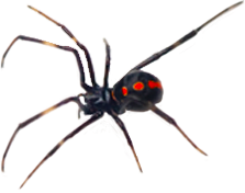 Pest Solutions Plus - Spider 2