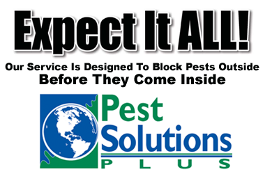 Pest Solutions Plus - Expect it all