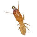 Pest Solutions Plus - Termites